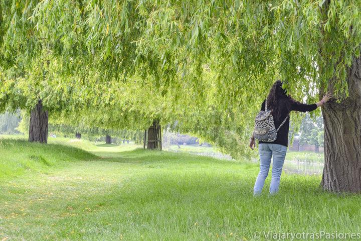 Vista en el interior del Bushy Park, uno de los parques mas bonitos de Londres