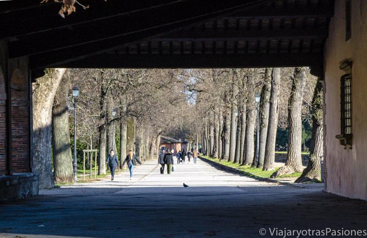 Hermosa vista del paseo sobra la muralla de Lucca, Italia