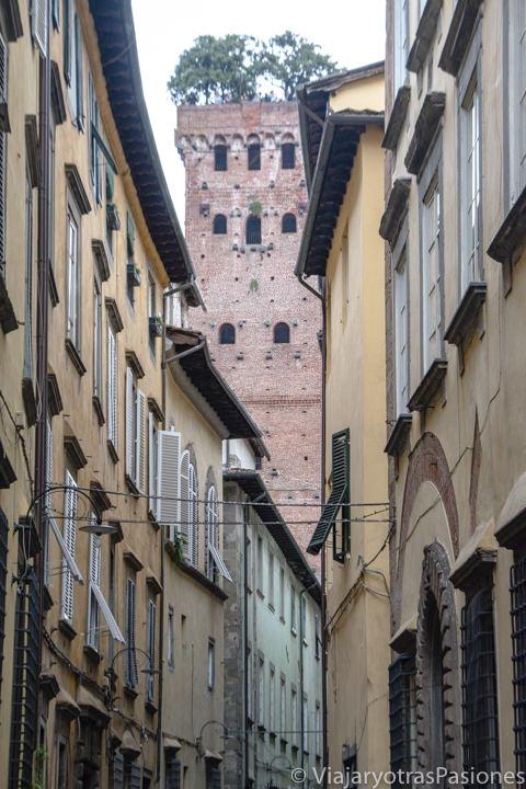 Bonita perspectiva de la Torre Guinigi en el centro de Lucca, Italia