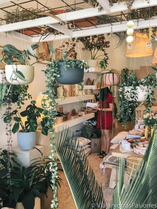 Interior del espectacular tienda de Nikau en el centro de Byron Bay, Australia