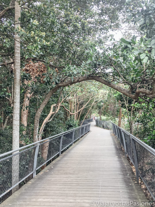 Vista del bonito Cape Byron Walking Track en Byron Bay, Australia