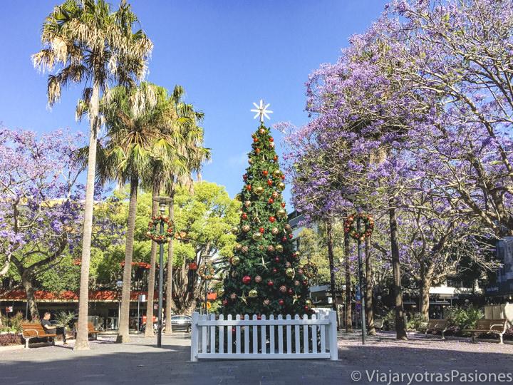 Árbol de Navidad en Sydney con palmeras y hermosas jacarandas, Australia