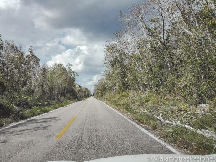Carretera en la selva para ir a Valladolid, México