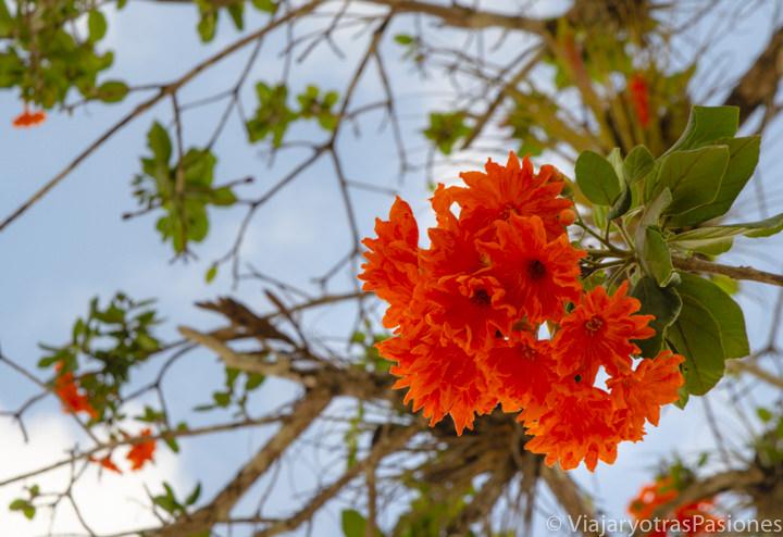 Espectaculares flores en Chichén Itzá, México