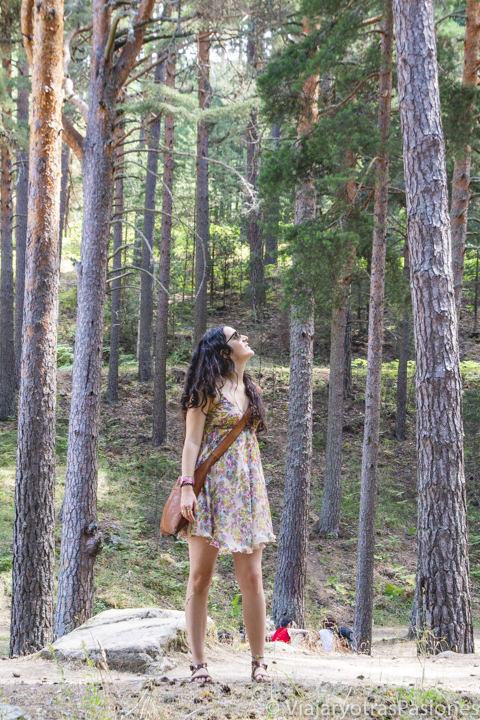 Vista de un bonito bosque de montaña cerca del pueblo de Navafría, en la provincia de Segovia