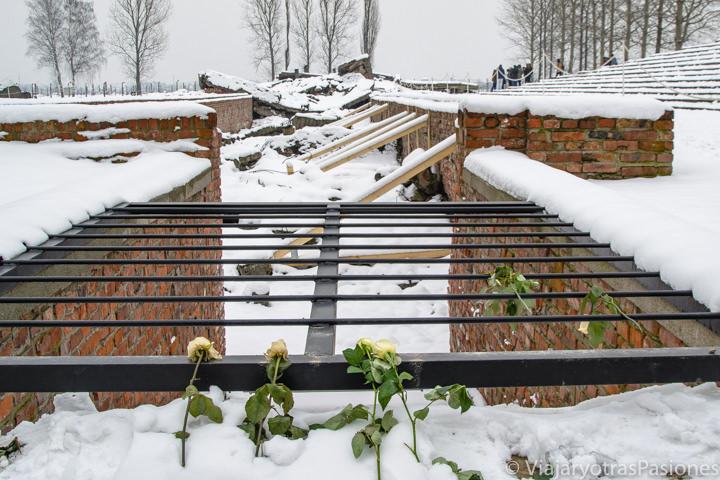 Detalle de las ruinas de la antigua cámara de gas en Auschwitz-Birkenau, Polonia